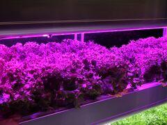 上野15 科博/植物-7 「生命の源、光合成」植物工場 ☆「目指せ、植物研究者!」corner