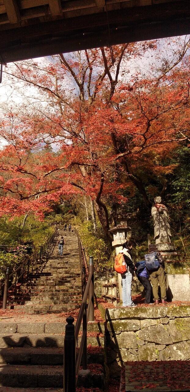 GO TO利用で奈良へ<br />宿泊先は奈良のへんなホテル<br />神社、紅葉、スイーツとコロナ禍の隙間での旅だったので、完全無計画に飛び出した旅<br />良かったけど、やはり旅は計画的に!<br />と自戒と反省を込めて記録。<br />コロナ明けたら、キチンと素敵な旅を計画するぞ!