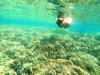 ベトナム、フーコック島のシュノーケリング&ダイビングスポット(シリーズ): サンゴ山