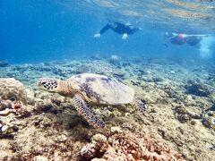 夏の締めくくりは、奄美大島で亀と泳ごう@Miru Amami