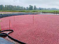 秋の風物詩 クランベリーの赤い湖