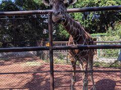 漸くワクチン接種、有給休暇は野毛山動物園