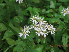 森のさんぽ道で見られた山野草及び花