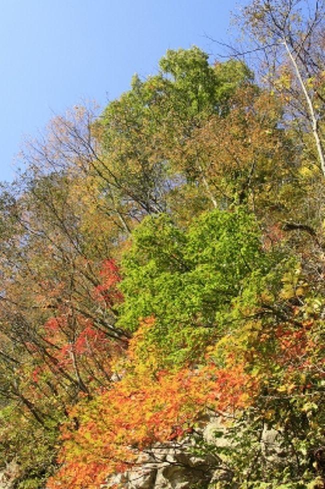気持の良い青空と、<br />色づき始めた木々のコントラストがとてもきれいです。<br /><br />今日も太陽が味方してくれました。<br /><br />それでは、<br />鳴子旅行記をどうぞごゆっくりご覧ください。