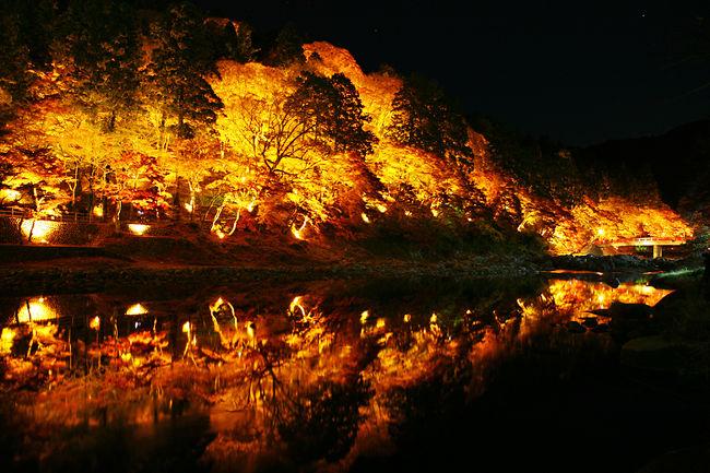 Aichi: Parque com 4000 árvores para tirar lindas fotos no outono!