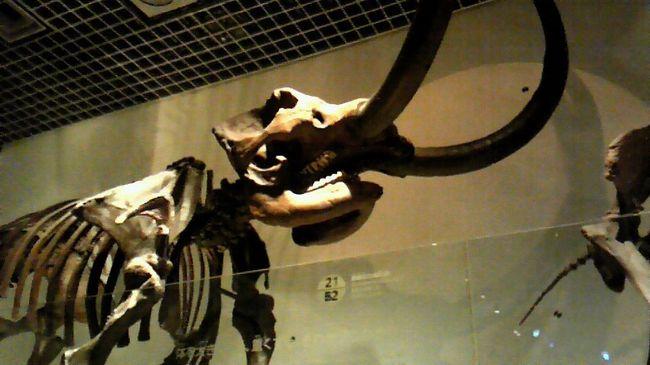 大恐竜展・知られざる南半球の支配者2009-国立科学博物館