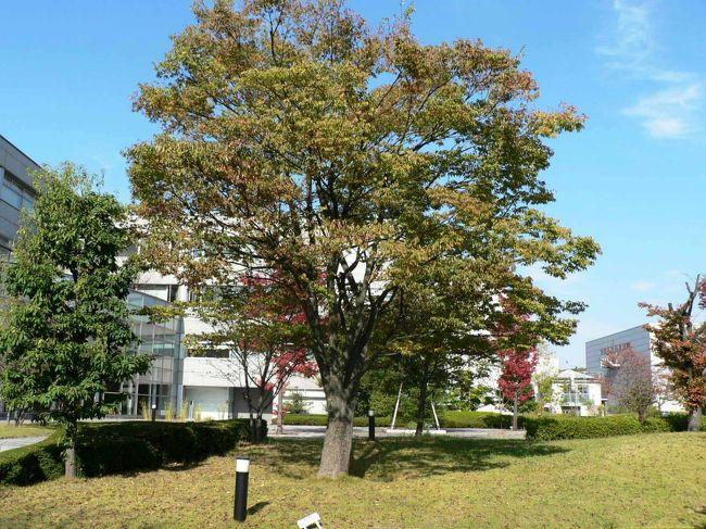 日本の旅 関西を歩く 京都、けいはんな学研都市の「私のしごと館」周辺 ...