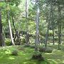 <西芳寺1>  以前は庭園の散策前に写経を行いましたが、方針が変わったのか写経はありませんでした。