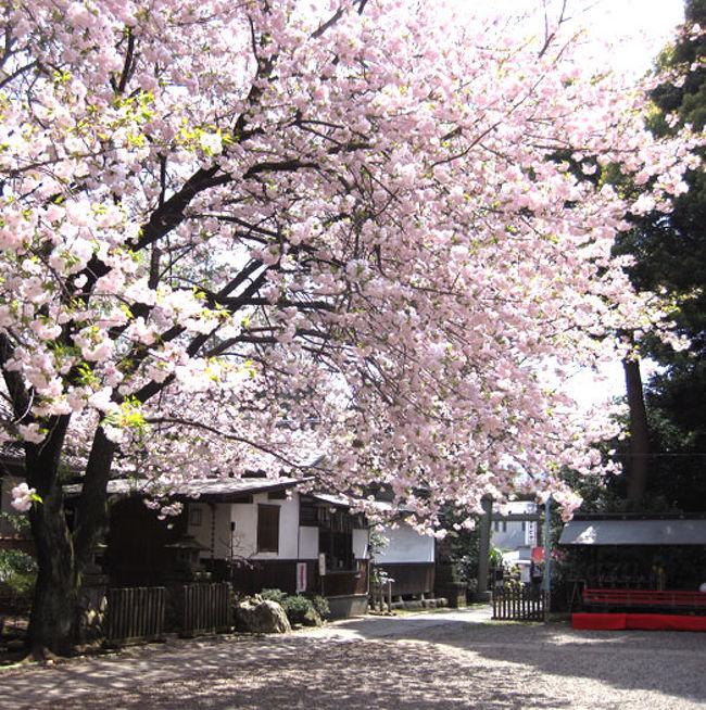 ときわ台 天 祖 神社