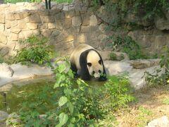 北京動物園のパンダ園のみ見学します。  パンダさん、可愛いです。