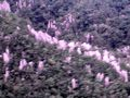 ムル国立公園の上空 ピナクルというところだそうです。