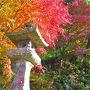 """栃木県:""""車で地元巡り"""" 裏山の散策目的で乾徳寺(那珂川町)へ、紅葉にため息"""