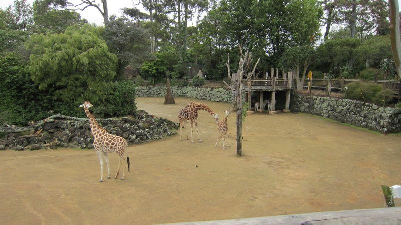 オークランド動物園