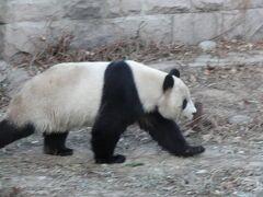 翌日は北京動物園へ