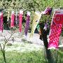 北茨城観光と福島の桜めぐり(1)