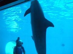 2004/9/18~22 初沖縄(沖縄本島のみ) http://4travel.jp/traveler/yasu_happy_go_lucky/album/10742760/ スキーやら海水浴やらいつも一緒に旅行している友達に沖縄旅行を誘われ初沖縄。初めての私がなぜかツアーをとりスケジュール作成。多くのハプニングがありました。ホテルのオーバーブッキングで2連泊の予定が1泊は別の宿に。2夕食つけさせましたが・・・でもここから私の沖縄旅行が始まったのは確かです。写真は老朽化でもうないイルカスタジオ。  沖縄全体  1回目 沖縄本島  1回目 美ら海水族館1回目