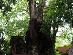 来宮神社は、樹齢が2000年と云われる大楠の樹がある神社。  古文書には木宮神社と記され、木に宿る神々をお祀りする神社として信仰されていた。  御神木の株は苔むし、パワー・スポットとして有名なのも納得の風格。  来宮神社で、面白いお守りを発見!  その名も虫よけ守り。  蚊に刺されにくくなるの? ゴキブリ等の害虫が寄ってこなくなるの…? その正体は、虫は虫でも昆虫ではなく、浮気虫や賭博虫。  まあ、悪い虫がつかなくなるためのお守り…ということかな。
