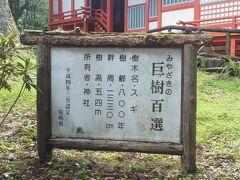 八村杉の説明