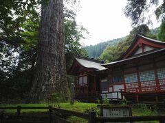 元久年間に椎葉を訪れた那須大八郎が植えたとされる十根の杉、十根川神社が八村大明神と呼ばれて この名前がついた。 「国指定天然記念物」