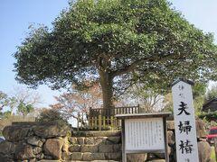 歩いていくとなにやら人々が写真撮影してる木がみえました。 夫婦椿です。   目の前には、八重垣神社がありました。 天気がよかったので気持ちよく歩けました。