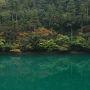 紅葉真っ盛り☆雨の面河渓&石鎚スカイライン