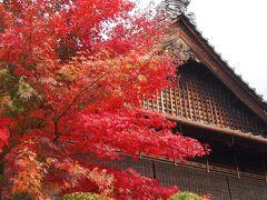 椿寺放生院あたりを過ぎる頃、 艶やかな紅葉樹が、出迎えてくれました。