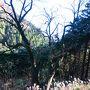 お気楽紅葉ハイキング ~鷹巣山と飛龍の滝・千条の滝~