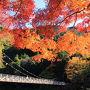 そんな行列をかきわけて、私たちは渓谷の方に降りてきました。 さっそく見えてきたのは、御岳小橋と鮮やかな紅葉!!