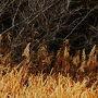 スイセンの咲く季節☆冬の葛西臨海公園