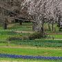 ☆桜満開には早すぎた、雨の日の昭和記念公園☆