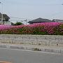 松阪城跡に遊ぶ
