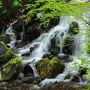 軽井沢で新緑の滝巡り♪~~竜返しの滝・白糸の滝・浅間大滝・魚止めの滝~~