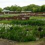 山田池公園に遊ぶ