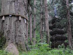 戻る途中、五重塔を見守るように立つ樹齢千年以上と言う爺杉を観る。 そして、また会いに来ると心に誓い、その場を離れた。