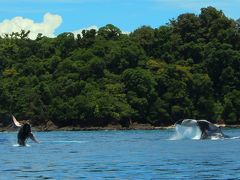 二頭のクジラは、スピンをしたり、大きくジャンプしたりと、まるで帰っていく私達に、もっと遊ぼう!と呼びかけているみたい。