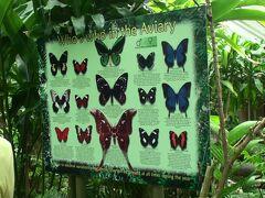 中に入ると施設内にいる蝶一覧。