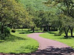 大室山ロープウェイは予想を超える混雑につき諦め桜の里に移動さました。