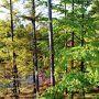 美しい色を求めて…長野の秋【赤色の蓼科~黄金色のヴィーナスライン編】@ハーヴェストクラブ蓼科ANNEX