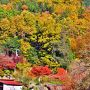 2014紅葉(9) 湖北の鶏足寺・石道寺・そして意冨布良神社の紅葉