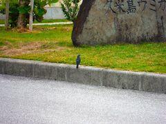 野鳥かな? 久米島ウミガメ館に行ってみたが、なんか静か・・・・。 で、やめといた。