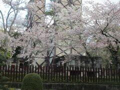桜が満開の韮山反射炉