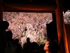 帰り際に、しだれ桜を振り返る。  目に映った光景は、しだれ桜の音にならない艶やかな囁き。 「また来年、見においで…」  櫻色の吐息が耳朶をくすぐるように通り抜けた。