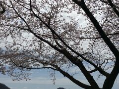 桜と琵琶湖と竹生島です。