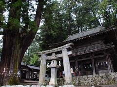 武田八幡宮は、趣のある場所だった。 特異な形をした石造りの鳥居。 その傍らに立つ大きな杉の木、そして重厚な門。 甲斐源氏武田氏初代信義が元服をした場所で、 以来武田氏の氏神となったお社であるが、創建はかなり古いみたいだ。 武田信玄が再建したと云う本殿を観てみたかったが、 バスの時間が迫ってきたので、改めて訪れることにした。