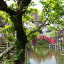 『35mmでいく東京散歩 15』 江東区亀戸 「亀戸天神の藤まつりと亀戸餃子、ついでにブルーボトルコーヒーも」
