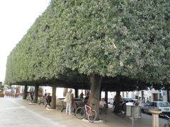 2013/04/29 ポポロ広場  すごい樹です!! ホテルを出たところにあります・・・ 樹の下にはベンチが置いてあり、地元の人が集まって談笑していました・・・