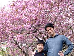 途中、森町のオニウシ公園でひと休み。  今年は桜が早かったけど、エゾヤマザクラが満開! 公園中が春の香りに満ちていました。