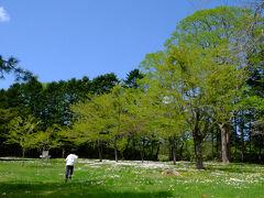 こちらは、さらんべ公園(八雲町)。  広いお花畑に心が躍ります!
