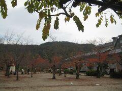 こちらの木々は紅葉の終わりかけ。 ベンチと近くにトイレがあったので、しばし休憩することに。