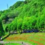2015 花フェスタ記念公園(6)夏の接近!~ポピーから蘭~